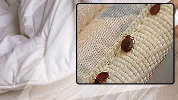 NC family sues North Myrtle Beach resort over bed bug infestation they say spread to their home