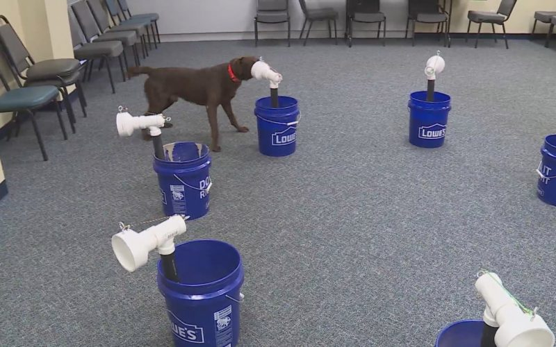 Dogs sniffing out COVID-19 in Hampton Roads may one day help stop the spread