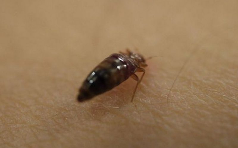 Expert issues warning over the rise in bed bugs - here's how to prevent them in the home