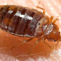 Bedbugs show up at Ottawa isolation hub for Nunavut residents