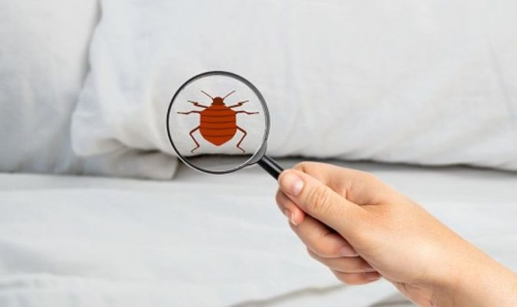 Bed bugs: How do you get bed bugs, what's the difference between bed bugs and fleas?