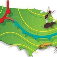 Entomologists From Rentokil North America Make 2021 Pest Predictions - PCT