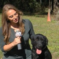 Alachua company training dogs to detect COVID-19