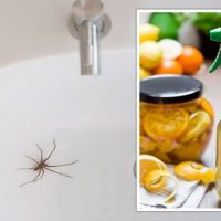 Pest control remedies - SIX household items to help get rid of pests